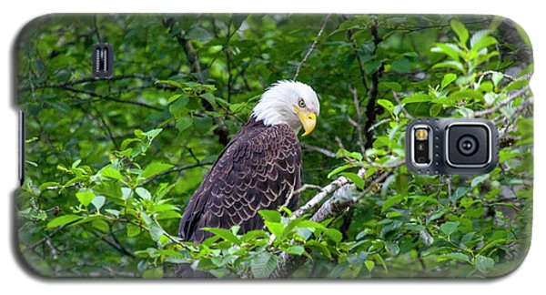Eagle In The Tree Galaxy S5 Case