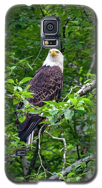 Eagle In Tree Galaxy S5 Case