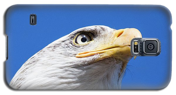 Galaxy S5 Case featuring the photograph Eagle by Jim  Hatch