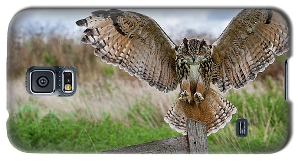 Eagle Owl On Signpost Galaxy S5 Case