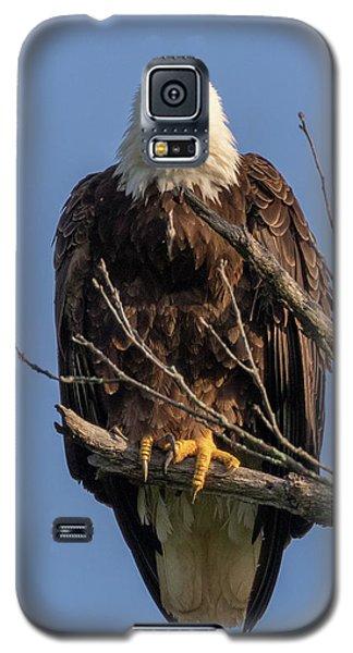 Eagle Stare Galaxy S5 Case