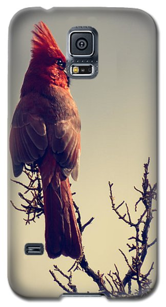 Early Evening Sentinel Galaxy S5 Case