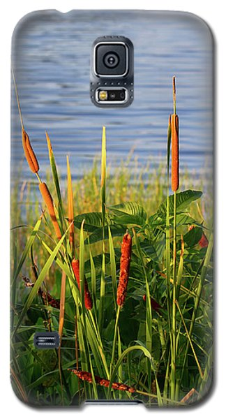 Early Morning Cattails Galaxy S5 Case