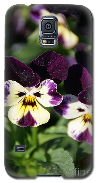 Early Morning Pansies Galaxy S5 Case