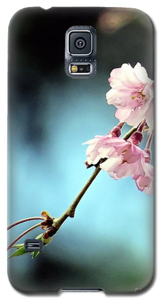 Early Spring Weeping Cherry  Galaxy S5 Case by Janice Drew