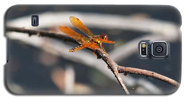 Eastern Amberwing Galaxy S5 Case
