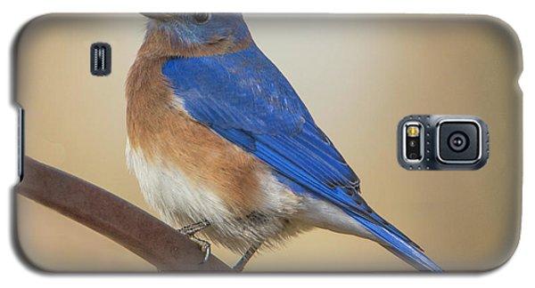 Eastern Blue Bird Male Galaxy S5 Case