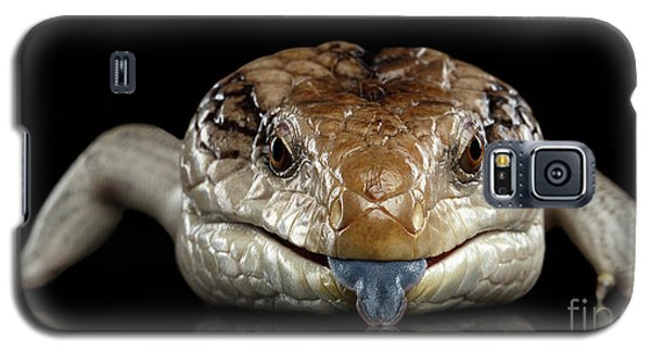 Eastern Blue-tongued Skink, Tiliqua Scincoides, Isolated On Black Background Galaxy S5 Case by Sergey Taran