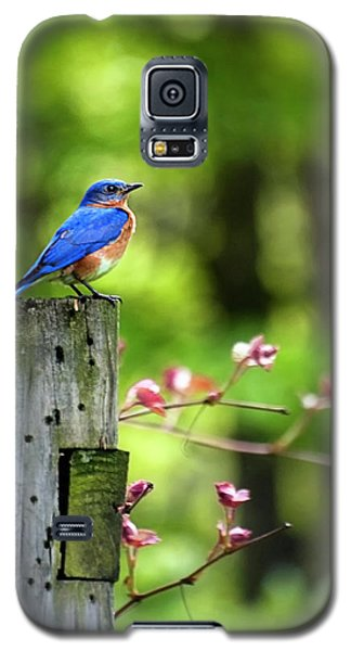 Eastern Bluebird Galaxy S5 Case by Christina Rollo