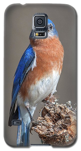 Eastern Bluebird Dsb0300 Galaxy S5 Case
