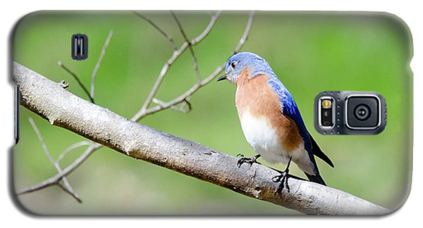 Galaxy S5 Case featuring the photograph Eastern Bluebird by George Randy Bass