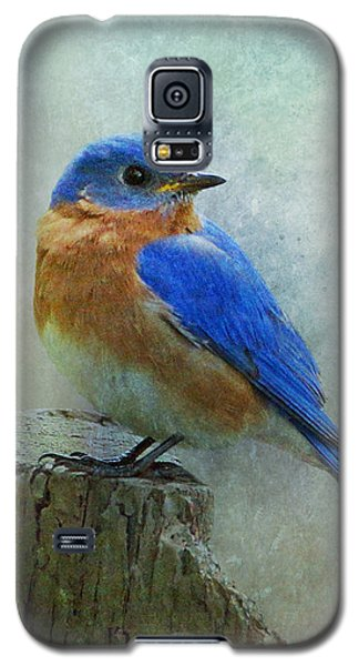 Eastern Bluebird II Galaxy S5 Case