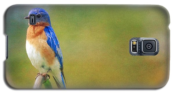 Eastern Bluebird Painted Effect Galaxy S5 Case by Heidi Hermes