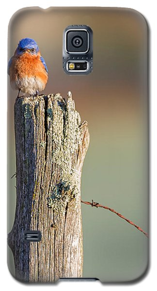 Galaxy S5 Case featuring the photograph Eastern Bluebird Portrait by Bill Wakeley