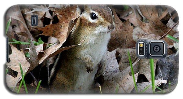 Eastern Chipmunk Galaxy S5 Case by Doris Potter