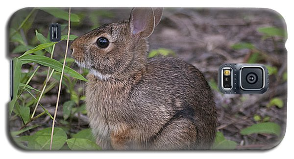 Galaxy S5 Case featuring the photograph Eastern Cottontail 20120624_11a by Tina Hopkins