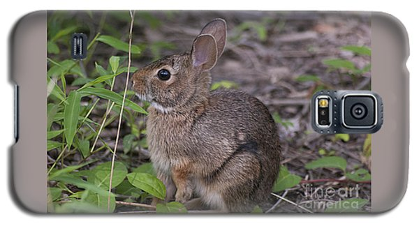 Eastern Cottontail 20120624_11a Galaxy S5 Case