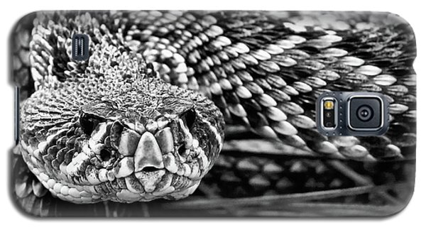 Eastern Diamondback Rattlesnake Black And White Galaxy S5 Case