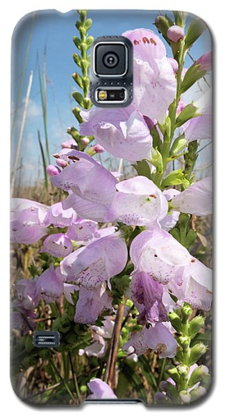 Galaxy S5 Case featuring the photograph Eastern Gray Beardtongue by Scott Kingery
