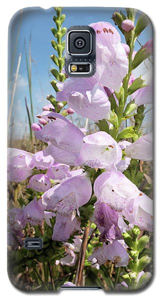 Eastern Gray Beardtongue Galaxy S5 Case by Scott Kingery