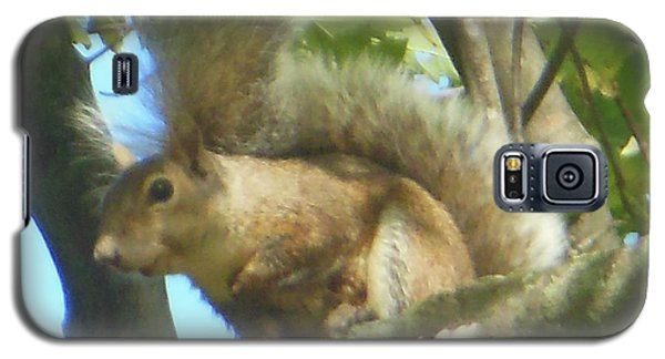 Galaxy S5 Case featuring the photograph Eastern Gray Squirrel Branch by Rockin Docks Deluxephotos