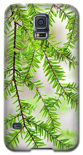 Galaxy S5 Case featuring the photograph Eastern Hemlock Tree Abstract by Christina Rollo