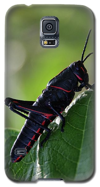 Eastern Lubber Grasshopper Galaxy S5 Case by Richard Rizzo