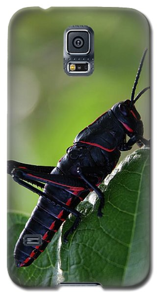 Eastern Lubber Grasshopper Galaxy S5 Case