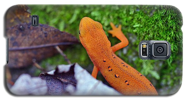 Eastern Newt Galaxy S5 Case by David Rucker