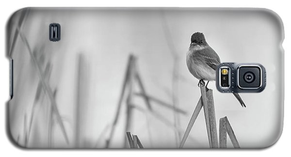 Eastern Phoebe 2017 Galaxy S5 Case by Thomas Young