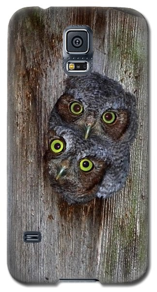 Eastern Screech Owl Chicks Galaxy S5 Case