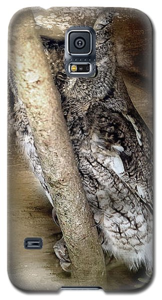 Eastern Screech Owl Plays Peek A Boo Galaxy S5 Case by Eleanor Abramson