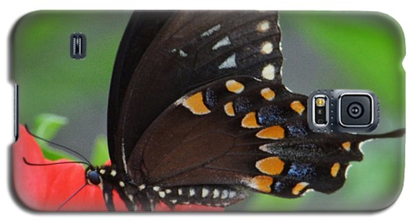 Galaxy S5 Case featuring the photograph Eastern Swallowtail by Penni D'Aulerio