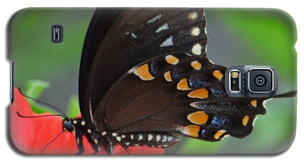 Eastern Swallowtail Galaxy S5 Case by Penni D'Aulerio