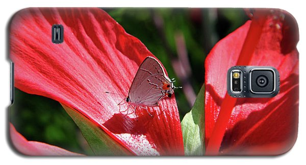 Eastern Tailed Blue Butterfly On Red Flower Galaxy S5 Case