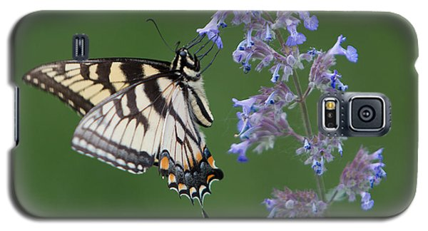 Eastern Tiger Swallowtail Profile Galaxy S5 Case