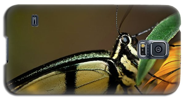 Eastern Tiger Swallowtail Butterfly Galaxy S5 Case by  Onyonet  Photo Studios
