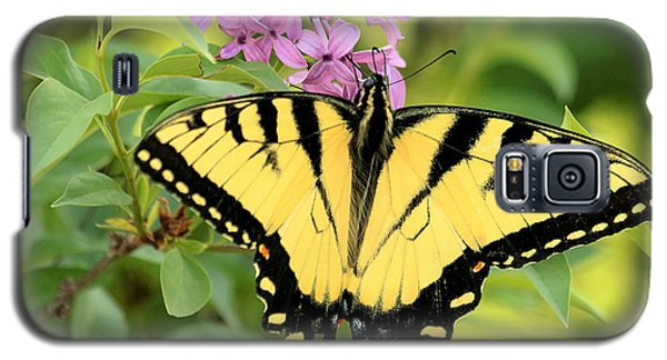 Eastern Tiger Swallowtail Butterfly Galaxy S5 Case