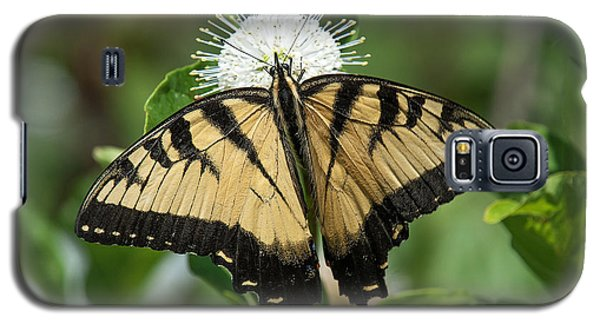 Eastern Tiger Swallowtail Din0254 Galaxy S5 Case