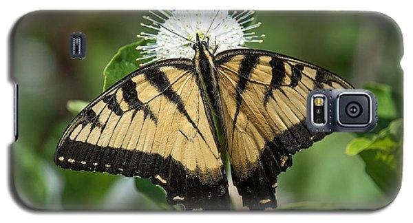 Eastern Tiger Swallowtail Din0254 Galaxy S5 Case