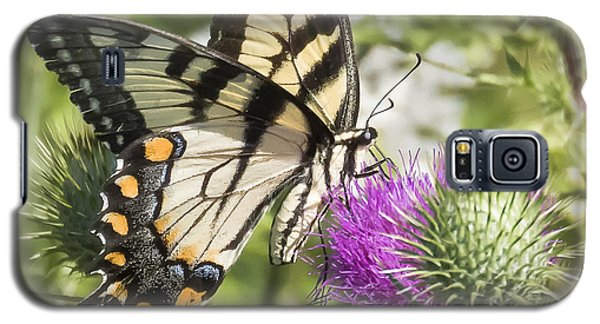 Eastern Tiger Swallowtail Galaxy S5 Case by Ricky L Jones