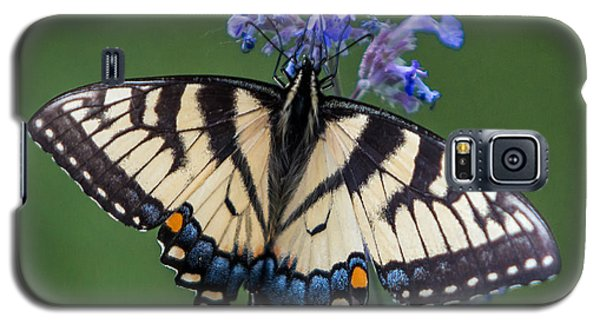 Eastern Tiger Swallowtail Wingspan Galaxy S5 Case
