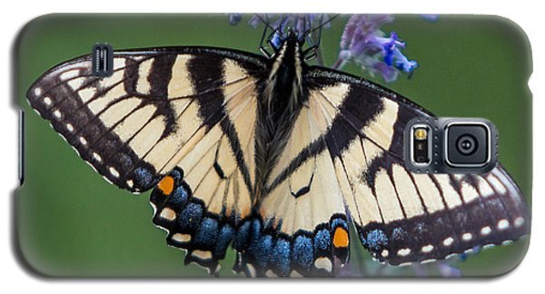 Eastern Tiger Swallowtail Wingspan Galaxy S5 Case