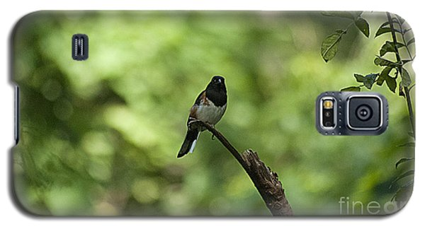 Eastern Towhee 20120707_52a Galaxy S5 Case