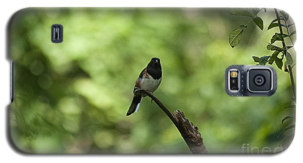 Galaxy S5 Case featuring the photograph Eastern Towhee 20120707_52a by Tina Hopkins