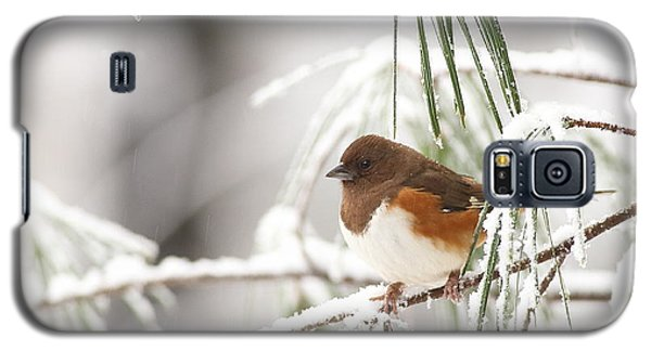 Eastern Towhee In Snowy Pine Galaxy S5 Case