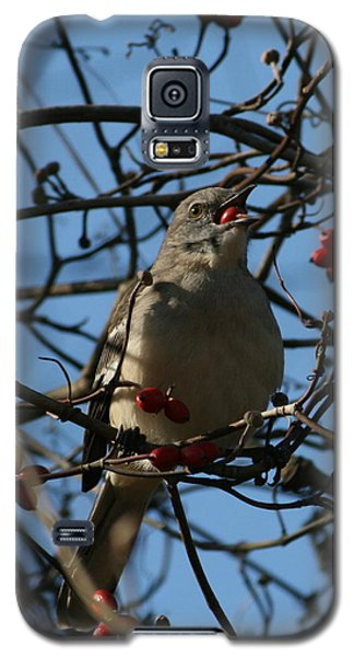 Galaxy S5 Case featuring the photograph Eating Berries by Cathy Harper