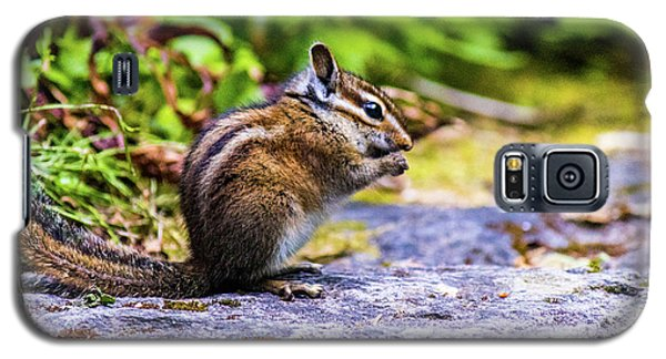 Galaxy S5 Case featuring the photograph Eating Chipmunk by Jonny D