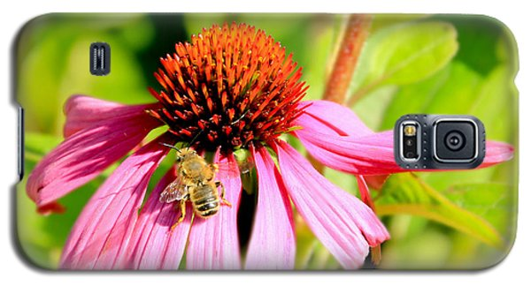 Echinacea Bee Galaxy S5 Case