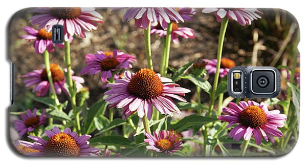 Galaxy S5 Case featuring the photograph Echinacea by Cynthia Powell